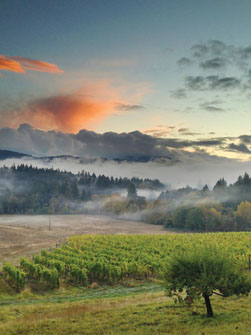 Sunset over Lumos Vineyard and Winery in Oregon